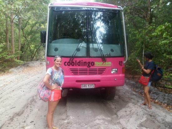 Cool Dingo Tour Fraser Island Tripadvisor