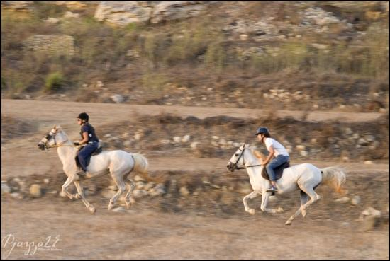 Qala, Malta: Horseback riding...