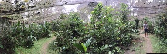 Bocas Butterfly Garden : in the rain