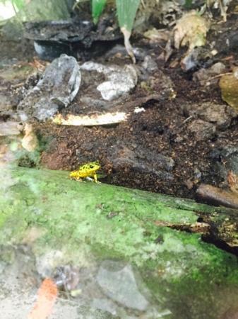 Bocas Butterfly Garden : frog tank