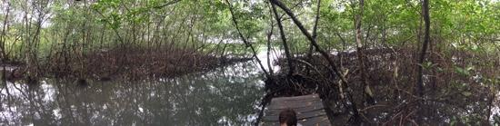 Bocas Butterfly Garden : dock