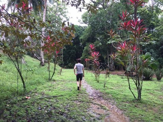 Bocas Butterfly Garden : walk to the farm