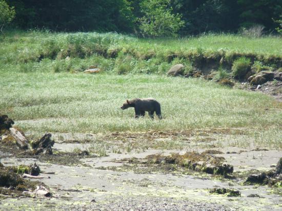 Prince Rupert Adventure Tours: Khutzeymateen Grizzly Bear