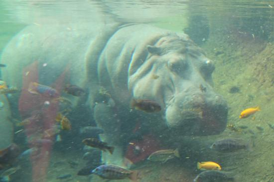 Zoo Picture Of San Antonio Zoo San Antonio Tripadvisor