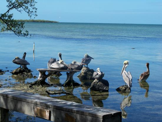 Key Largo 2017 Best of Key Largo Tourism TripAdvisor – Key Largo Tourist Attractions Map