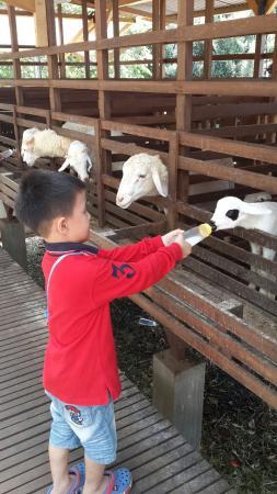 Bogor, อินโดนีเซีย: farm field Kuntum