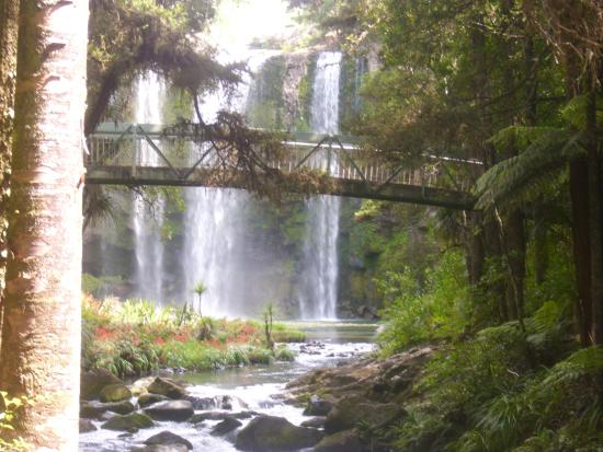Whangarei, New Zealand: The 45 minute walk to the Kauri trees