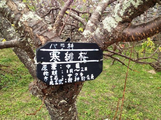 今帰仁城跡: fotografía de Nakijin Castle Remains, Nakijin-son - TripAdvisor