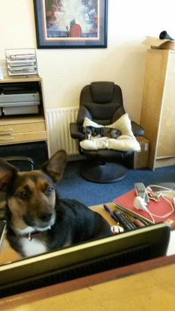 Barmy Badger Backpackers: The pups in the office (always looking for pats)
