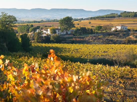 Sant Pau d'Ordal, Spanien: Bodega Eudald Massana Noya - Agricultura ecològica i biodinàmica