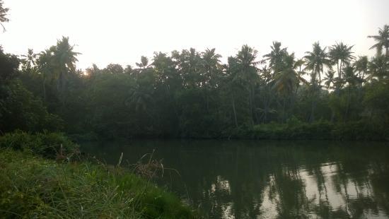 Ponnumthuruthu Island: around the island and river bank