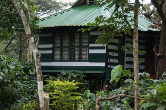 Pachyderm Palace: tree house