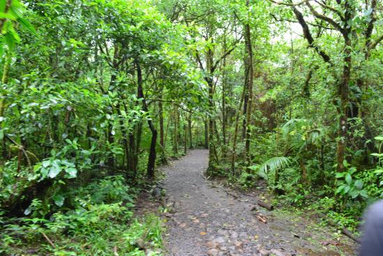 Rio Celeste : inicio del sendero, luego es camino de tierra