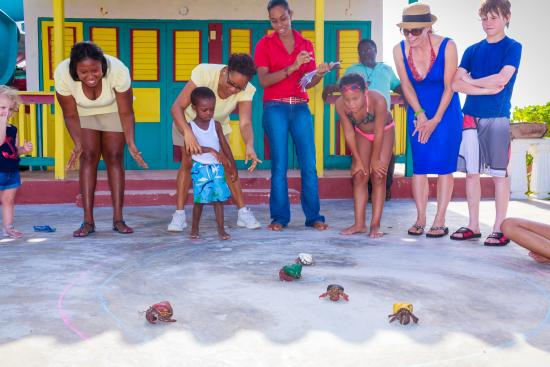 Franklyn D. Resort & Spa: crab races