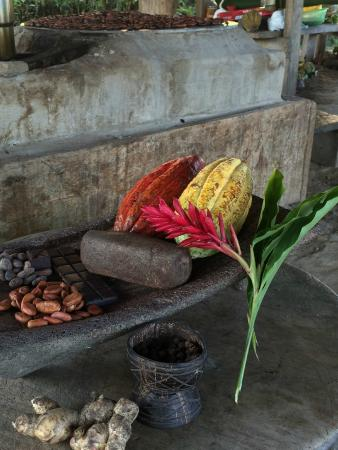Agouti Cacao Farm : Straight from the cacao all the way to the finished chocolate product.