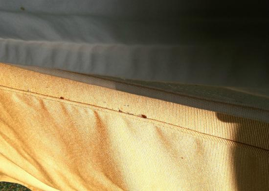 Lawndale, CA: Some of the bed bug infestation on the seam of the mattress