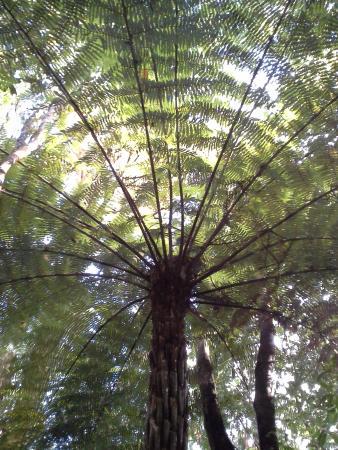 Okaihau, Yeni Zelanda: Looking Up