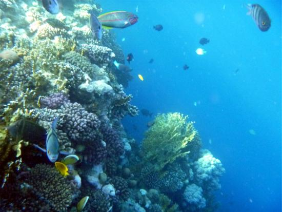Sharm Reef Hotel: Hotel's Coral Reef. A thing of wonder and beauty.