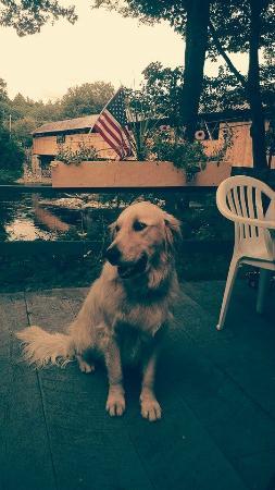 Covered Bridge Farm Table: Pet Friendly Patio
