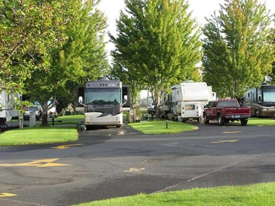 Pilot RV Park: Shade trees