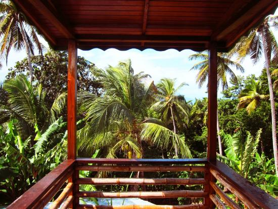 POZ Restaurant & Bar at Calibishie Gardens : Our view from Poz every morning, pure jungle!
