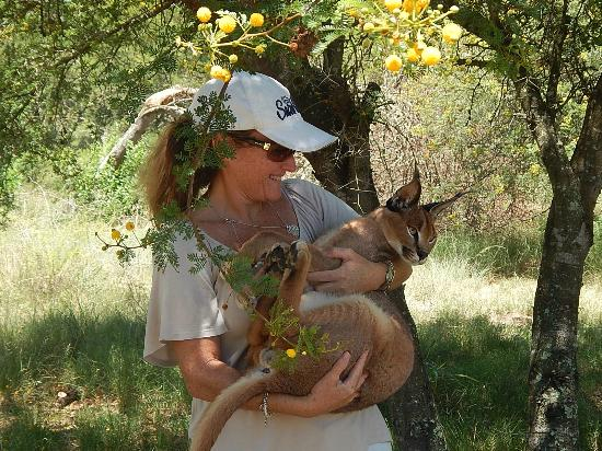 Nyaru Private Game Lodge: Holding the Caracal