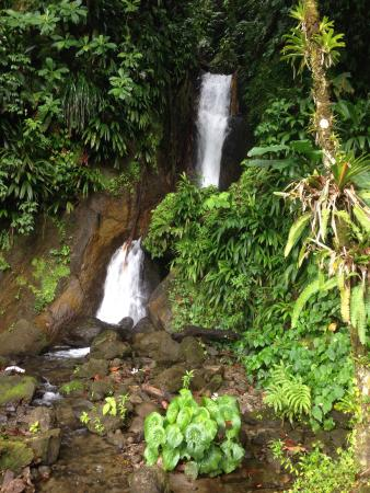 Papillote Tropical Gardens : Falls by lower mineral bath