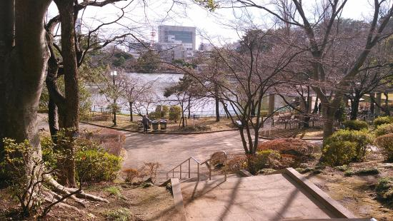 Chiba Park: Park in winter