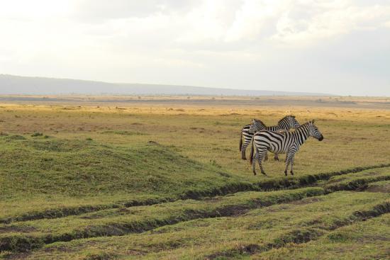 Sentinel Mara Camp: zebra