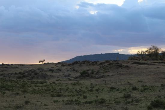 Sentinel Mara Camp: sunset