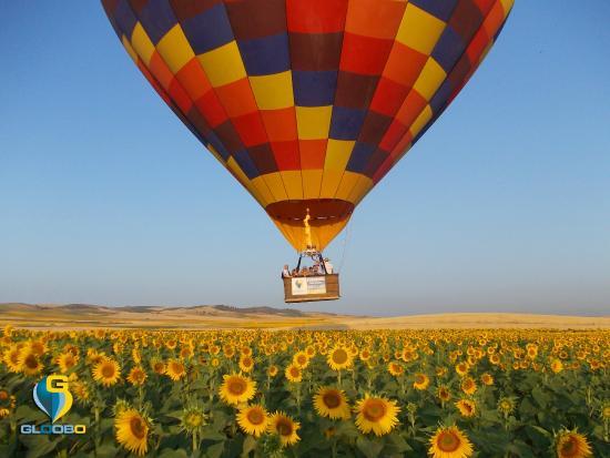 Gloobo: El globo sobrevolando los campos de girasoles de Sevilla