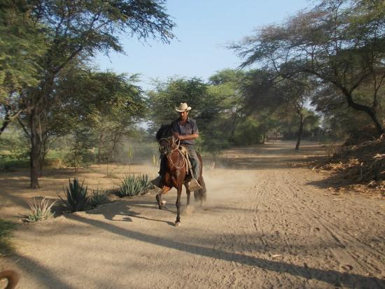 Horseback riding Rancho Santana: smooth horses