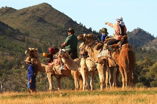 Camel Treks Australia