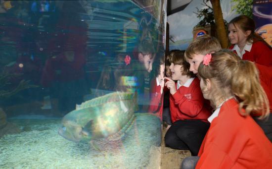 National Sea Life Centre: School meets sea creatures