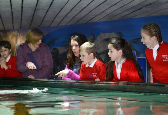 National Sea Life Centre, Birmingham - zdj?cie: School Visits The Bay ...