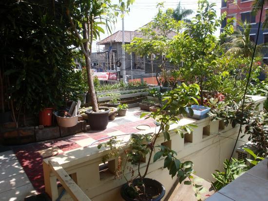 Homestay Heru: Showing part of the veggie garden. Bu Heru is very much into growing her own veggies.