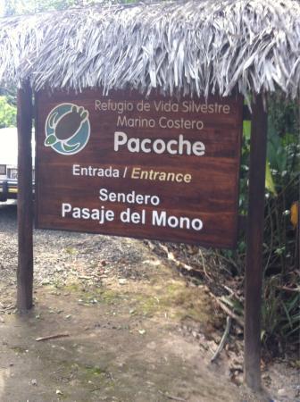 Manabi Province, الإكوادور: Buscando los monos aulladores