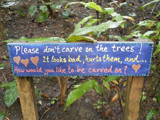 Flower Forest: Sign on carving on trees!