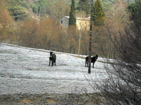"""Logis la Corniche des Cévennes : le pré en face, """"pôvres"""" chevaux"""