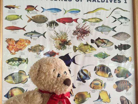 Mirihi Island Resort: Fischtafel im Tauchcenter