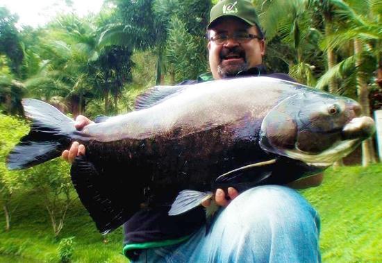 Juquia, SP: Pesca Esportiva - peixes de até 38 Kg