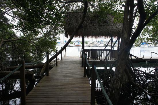 Bocas Island Lodge: Aquí te deja la lancha luego hay que caminar un poco hasta llegar al hostel. N