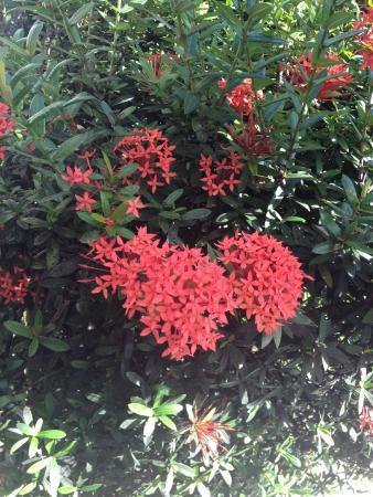 Les Jardins de Pointe Noire: jardin fleuri