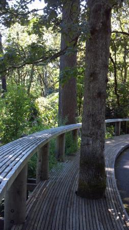 Hendricks Park: Beautiful landscaping, artistic.