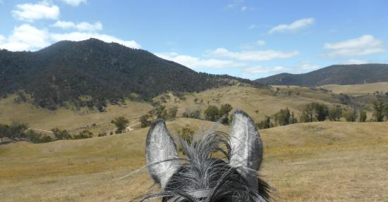 Packer's High Country Horse Riding
