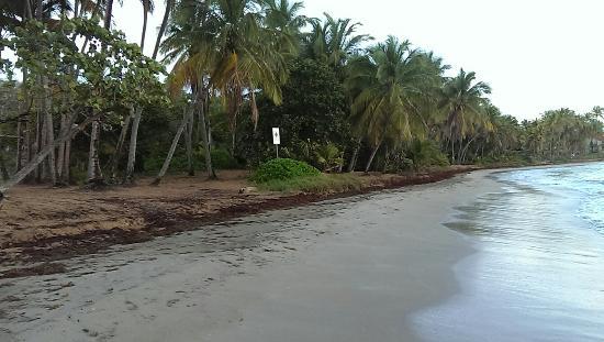 Park Royal Puerto Rico at Club Cala: Natural Beach at Club Cala