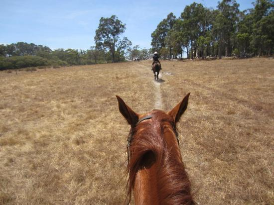 Jesters Flat: Riding on the back of the horse