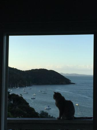 Mangonui Motel : Tiger, best friend of host Rich Myers