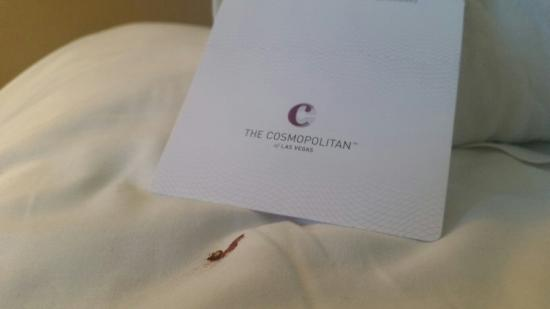The Cosmopolitan of Las Vegas, Autograph Collection: Cosmopolitan bed bugs!
