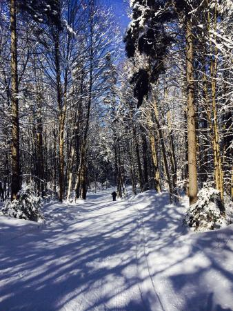 Craftsbury Outdoor Center: The trails!